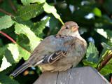 Baby Sparrow 2.jpg