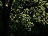 The Beauty of Trees 2.jpg