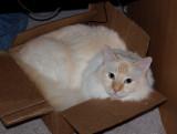 Milo You Crazy Cat.jpg