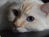 Milos Pretty Face 2