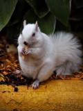 McSquirrel_F.jpg