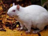 Albino Squirrel for Julia.jpg
