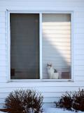 Calico Cat in the Window_F.jpg