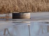 The ol Water Trough.jpg