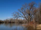 The Minnesota River in Spring.jpg