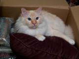 Milo in a Box rp.jpg