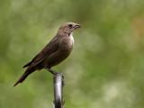 Patio Bird 2