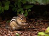Our Little Chipmunk 2