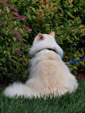 Milo on His Outdoor Adventure 3