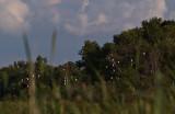 The Egret Trees.jpg