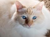 Milo-Mr Blue Eyes.jpg