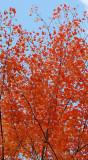 Autumn 2009_4.jpg