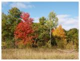 Autumn 2009_9.jpg