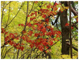 Yellow-Green Red Leaves.jpg