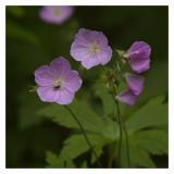 Wild Flowers n Fly