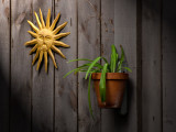 Sun n Plant on Barn Board