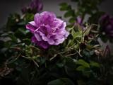 Grunge Pink Flower.jpg