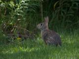 Cute Bunny Rabbit.jpg