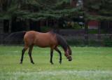 Horses at Coon Lake_4.jpg