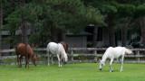 Horses at Coon Lake_3.jpg