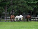 Horses at Coon Lake.jpg