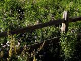 Fence N Flowers
