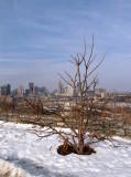 Bare Tree City Backdrop