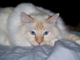 Milo Eats Blankets