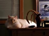 Milo on Marv's Desk