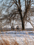 Wheels Under Tree
