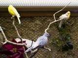 Emilys Birds
