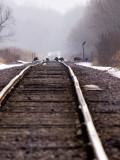 Turkeys on the Tracks 2