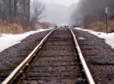 Turkeys on the Tracks