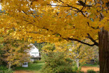 New England Fall Foilage