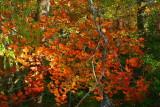 Kentucky Foliage ...