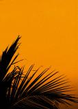 Orange delight ...