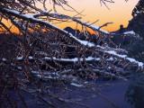 Winter's Dawn