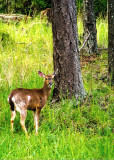 ... a local resident having lunch ...
