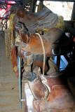 Saddle up, pardner