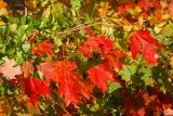 Kentucky Fall Foilage