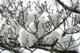 A Rare Snowfall in Kentucky ...