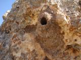 Rotsklever / Western Rock Nuthatch