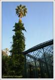 Washingtonia robusta e Glicine