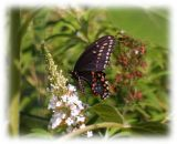 louisiana_butterflies
