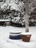 Still Life in the snow