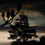 Dark Dawn
