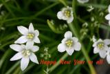 Happy New Year flowers