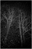 081123__450d00361_snow