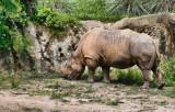 rhino-solo1