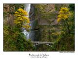 Multnomah In Yellow.jpg